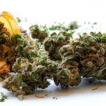 Marijuana glossary: Ten words every marijuana patient needs to know
