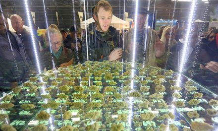 Preview to Sonoma County's 13th Emerald Cup 2016