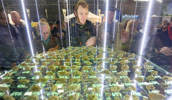 The Emerald Cup takes place Dec. 10 and 11 at the Sonoma County Fairgrounds. Photo: Kent Porter.