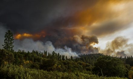 Medical Marijuana Helps Calaveras County Recover After Disastrous Fire