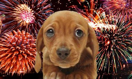Marijuana Ingredient Being Advocated To Help Dogs Deal With Anxiety During Fireworks