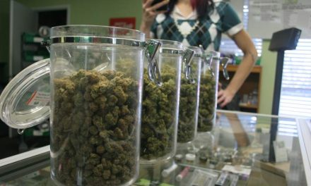 High Expectations for Sonoma County Pot Industry
