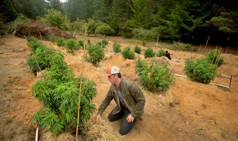 Cannabis Appellations? They're coming.