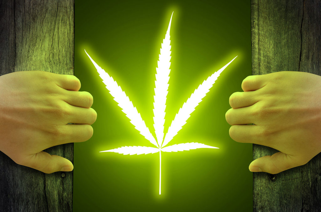 legalisation of cannabis uk essay Should cannabis be legalized in the uk at the time that this essay is being written, marijuana is an illegal drug in most parts of the world this is something that.