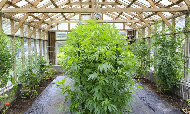 Sonoma County Planning Commission OKs small rural pot gardens