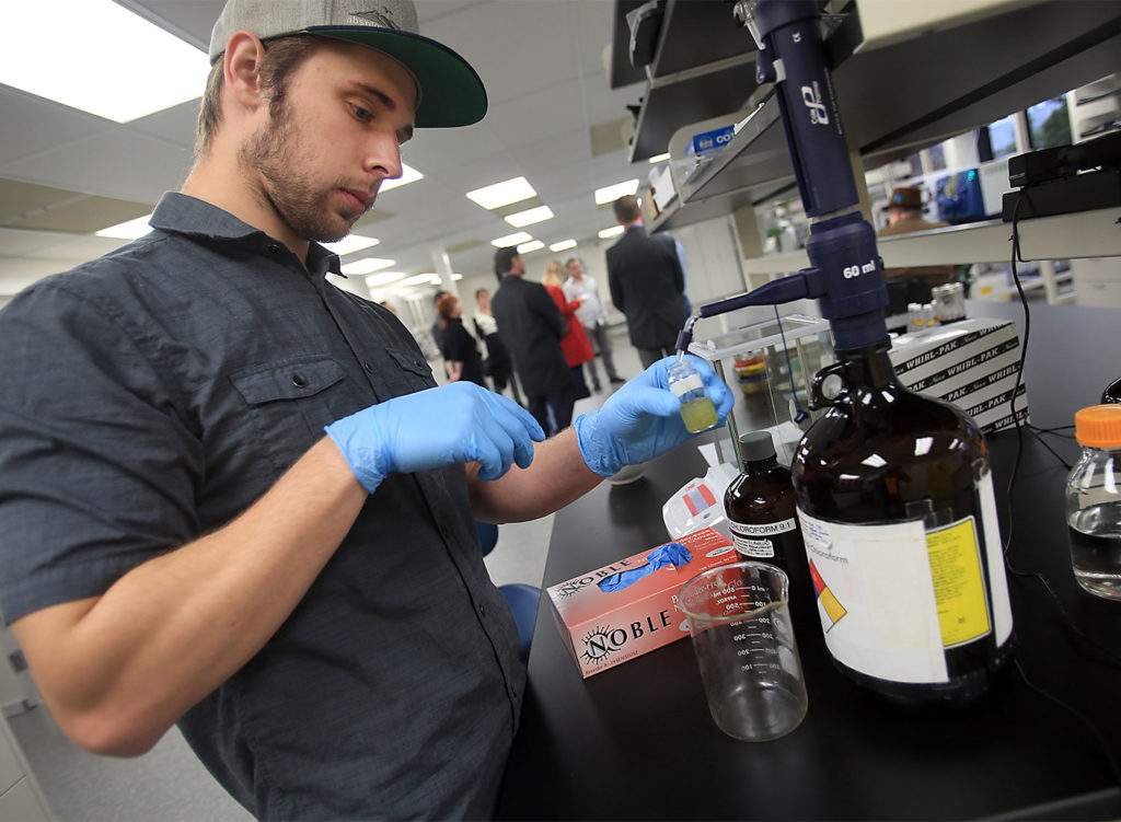 CBD analyst Kevin Nolan uses a methanol chloroform mixture to help extract cannabinoids from the matrix of marijuana, that will be used to analyze how to prepare for the final strength of the product, Wednesday Dec. 14, 2016 in Santa Rosa. (Kent Porter / The Press Democrat) 2016 Kent Porter