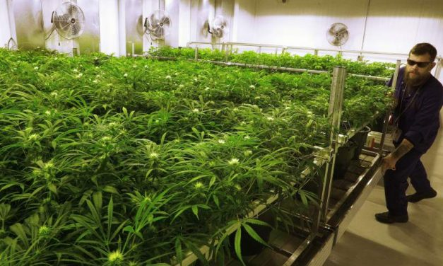 The Year in Cannabis News: What's to Come in 2017?