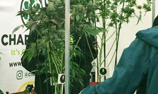 Entrepreneurs finding green in marijuana's sidestream