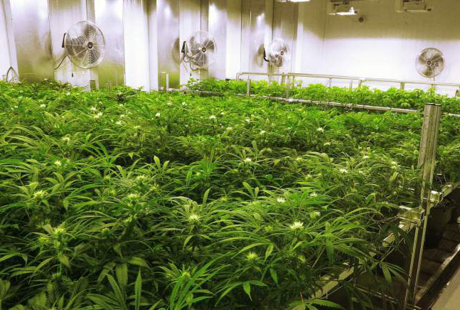 Are cannabis tenants cause for concern?