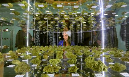 Many 2016 Emerald Cup winners disqualified for pesticides