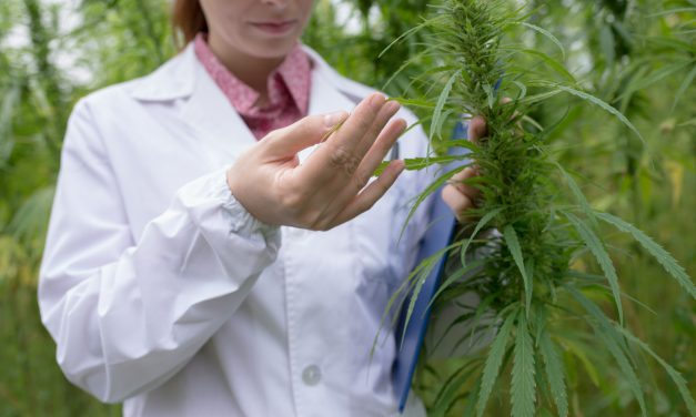 Study: 'Weed's Effectiveness Can't Fully Be Studied Until The Feds Re-categorize It'