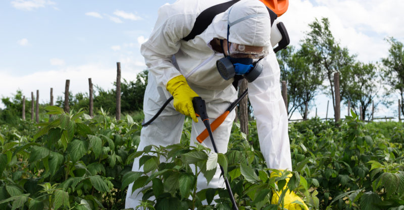 Pesticide drift from other agricultural products can be a real problem for cannabis growers