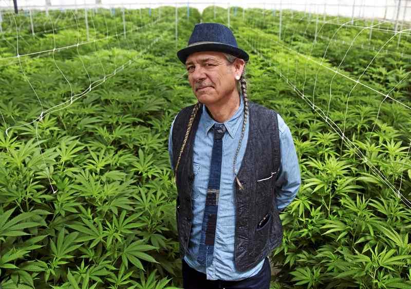 Fallow Flower Fields in Salinas Valley Getting a Marijuana Makeover