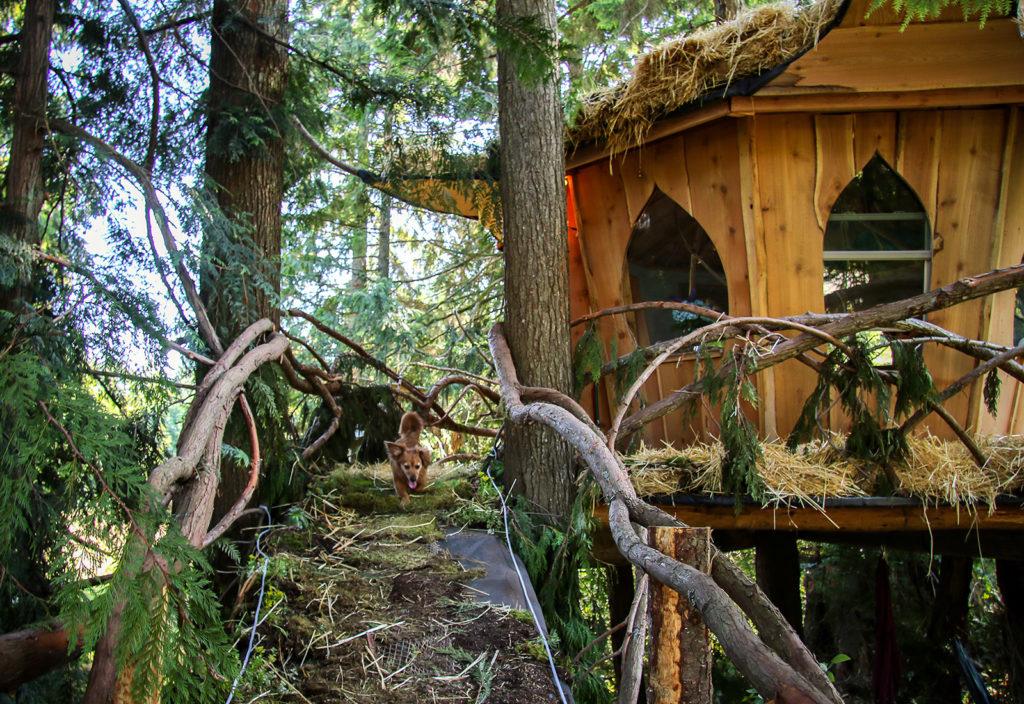Bed And Breakfast Treehouse California