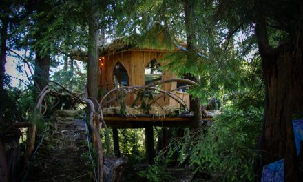 Bud and Breakfast: Grown-up treehouse a fantasy 420 stay
