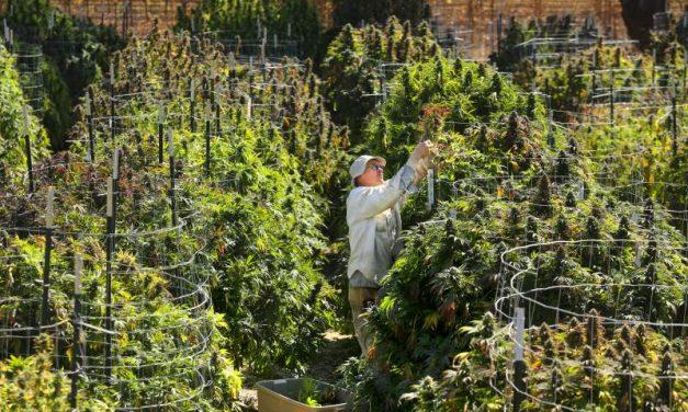 County cannabis advisory group begins setting agenda