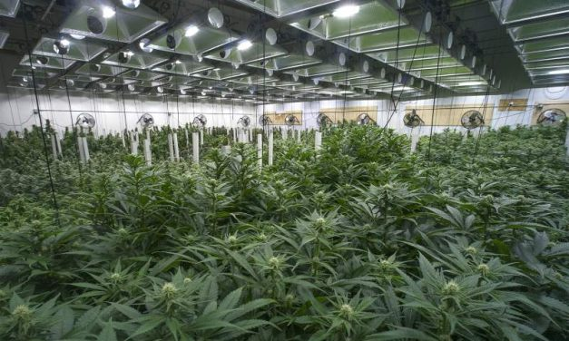 Cannabis business permit applications triple in Sonoma County