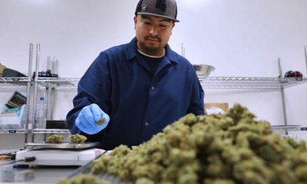 Pot businesses rush to fill Santa Rosa industrial buildings