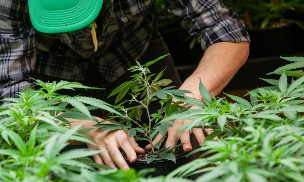 Siskiyou County calls for state aid to combat pot farms