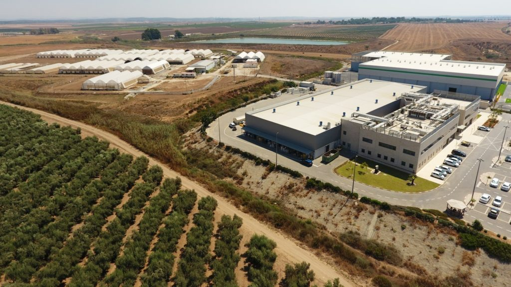 Future cannabinoid-based drugs now being tested in Israel
