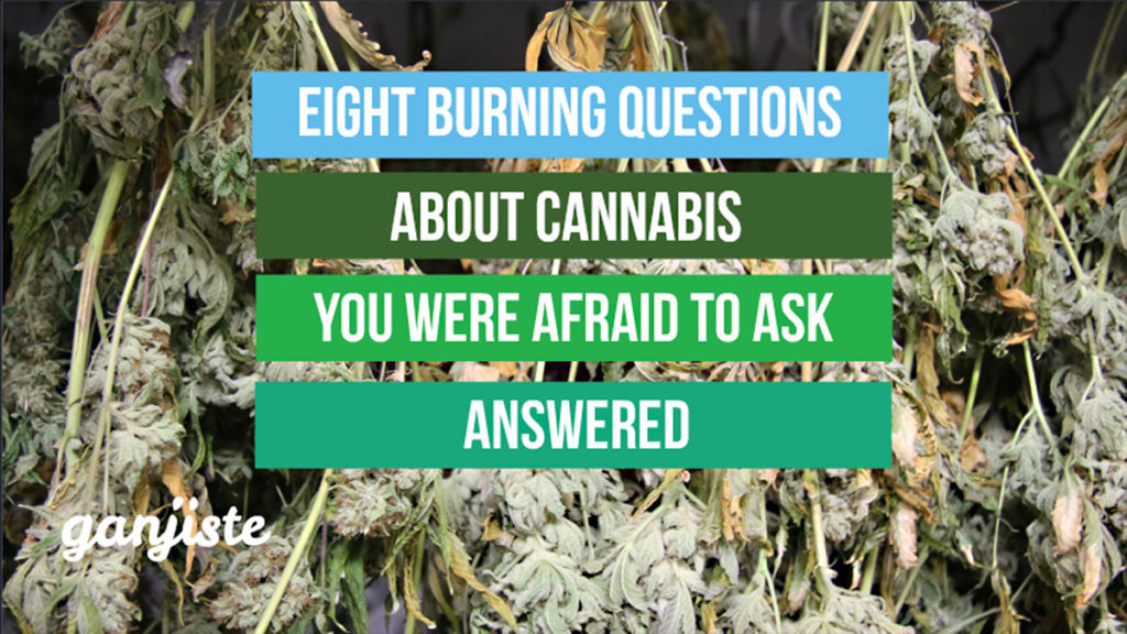 Answers to 8 burning cannabis questions you were too afraid to ask