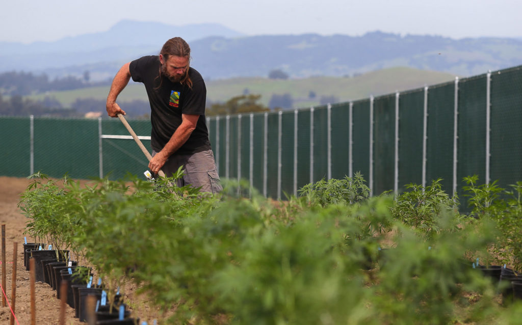 Neighbors balk as legal cannabis gains ground in Sonoma County