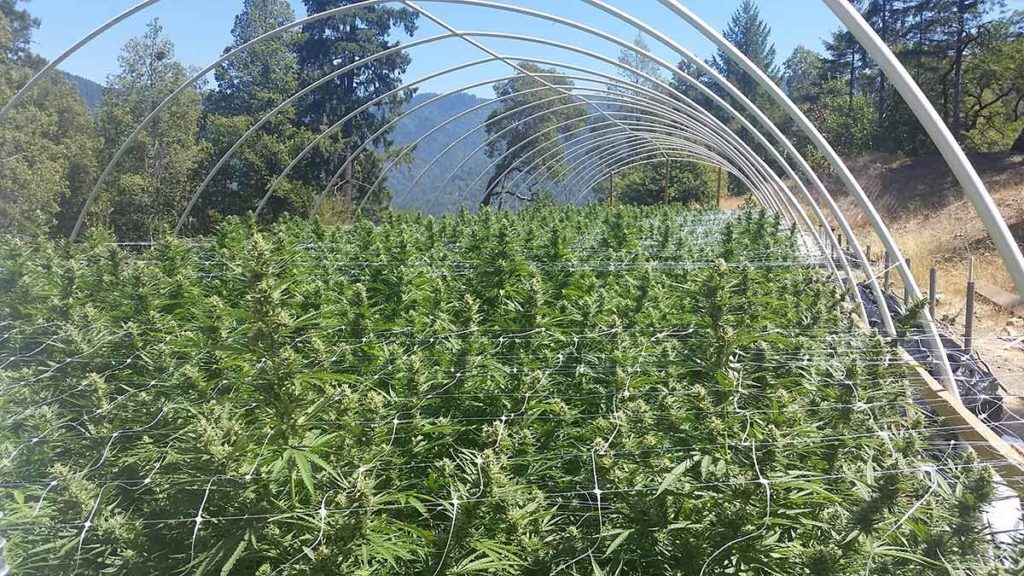 Green acres: 5 cannabis farms on the market in Northern